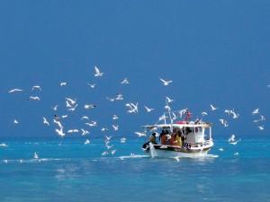 corfu-hotel-fishing-beoat